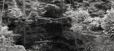 Lovisa Ringborg, 'Forest', 2020
