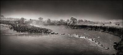 Nick Brandt, 'Zebras River Crossing', 2006