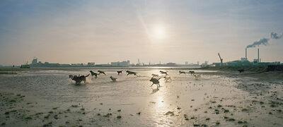Ellen Kooi, 'Amsterdam – Honden', 2005