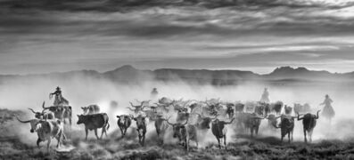 David Yarrow, 'The Thundering Heard ', 2021