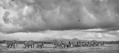 Michel Ghatan, 'Elephant Family Crossing', Amboseli, Kenya, 2020
