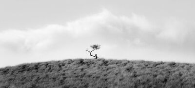 Brian Kosoff, 'Crooked Tree', 2012