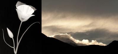 Brenda Biondo, 'Sego Lily/Pikes Peak Clouds', 2013