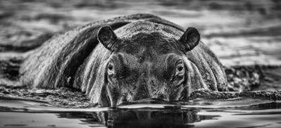 David Yarrow, 'The Last Dance', 2020
