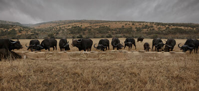 Claire Rosen, 'The Water Buffalo Feast', 2016