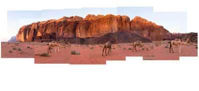 Marcos Chaves, 'Wadi Rum Camels', 2014