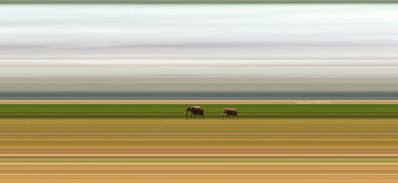 Jay Mark Johnson, 'Amboseli Migrations #1 Kenya, 2014', 2014