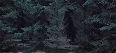 Michael Lange, 'WALD   Landscapes of Memory#5420', 2010