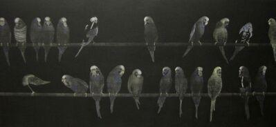 Graeme Peebles, 'budgerigars ', 1991-1992