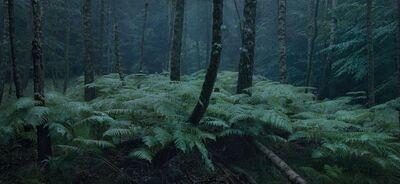 Michael Lange, 'WALD | Landscapes of Memory#0095', 2010