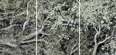 Santeri Tuori, 'Forest #32', 2017