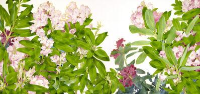 Gary Bukovnik, 'Rhododendron', 2019