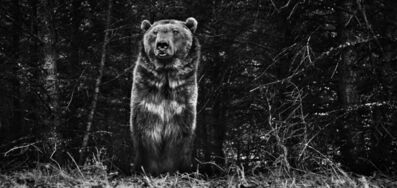 David Yarrow, 'The Boss', ca. 2015
