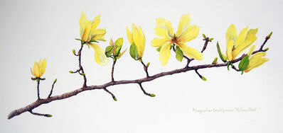 Sharon Way-Howard, 'Yellow Bird Magnolia Branch', 2019
