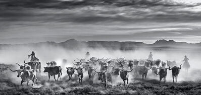 David Yarrow, 'The Thundering Herd', 2021