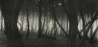 Bae Bien-U, 'Sonamu Pine Tree (special edition)', 1992
