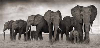 Nick Brandt, 'Elephants resting, Amboseli', 2007
