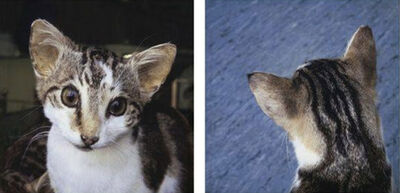 Roni Horn, 'Untitled- Kitty Cat (diptych)', 2000