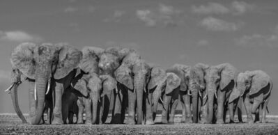 David Yarrow, 'Defense', 2019