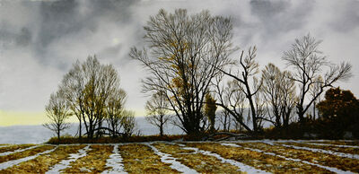 Peter Sculthorpe, 'Boundry Hedge, Southeastern Chester Co., Pa', 2019
