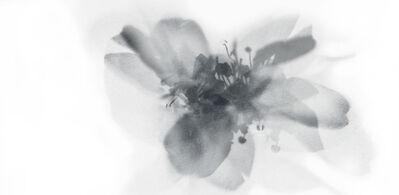 Stefania Ricci, 'Insieme Naturale 046', 2005