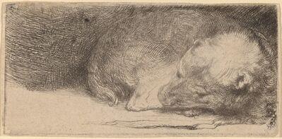 Rembrandt van Rijn, 'Sleeping Puppy', ca. 1640