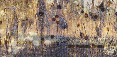 Lori Van Houten, 'Field Notes (Wild Hydrangea)', 2006