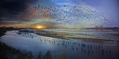 Stephen Wilkes, 'Sandhill Cranes, Rowe Sanctuary, Nebraska', 2017