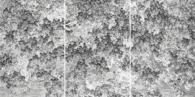 Santeri Tuori, 'Forest #37  ', 2017