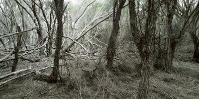Rosemary Laing, 'weather (Eden) #2', 2006