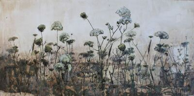 Diana Majumdar, 'Field of Queen Anne Lace', 2018