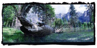 David Glick, 'Fallen Tree'