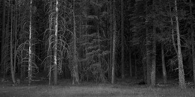 Tressa Pack, 'Edges of Woods #2', 2018