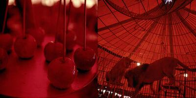 Miguel Rio Branco, 'Apple lioness', 2011