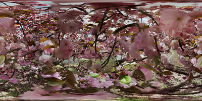"Jason Horowitz, '""Cherry Blossoms, Washington, DC""', 2018"