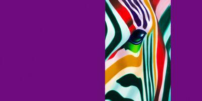 Norma, 'Zebra Ouverture', 2015
