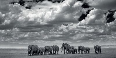 David Yarrow, 'The Waterboys', 2017