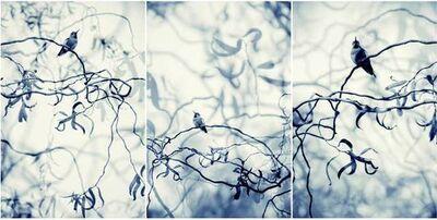 Thea Schrack, 'Blue Willows Triptych', 2010