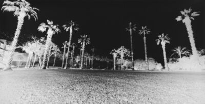 Vera Lutter, 'Palm Trees, Giza: April 20, 2010', 2010