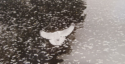 Yamamoto Masao, 'KAWA=FLOW #1617', 2012