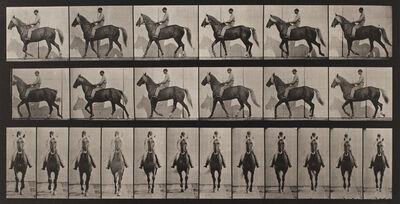 "Eadweard Muybridge, 'Plate 654, Animal Locomotion: ""Buckskin"" walking, lame right front foot', 1872-1885 / printed 1887"