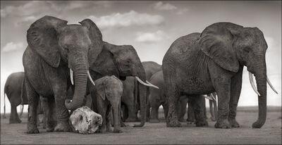 Nick Brandt, 'Elephant Skull, Amboseli', 2010