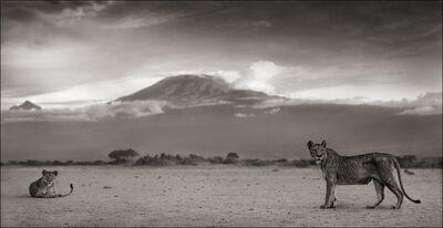 Nick Brandt, 'Lioness with Kilimanjaro, Amboseli ', 2010