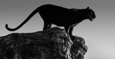 David Yarrow, 'Black Cat', ca. 2019