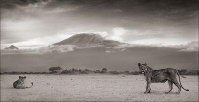 Nick Brandt, 'Kilimanjaro Lioness, Amboseli 2010', 2010