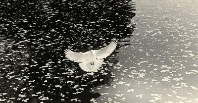 Yamamoto Masao, 'Untitled #1617', 2012