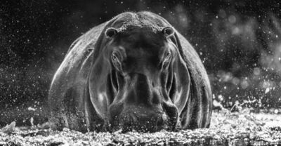 David Yarrow, 'Dexter ', 2018