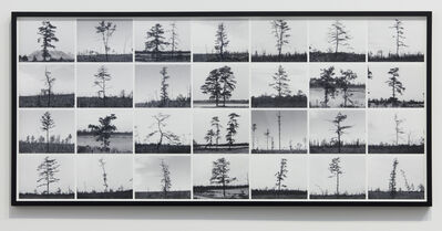 Nancy Holt, 'Pine Barrens: Trees', 1975