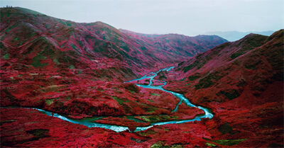 Richard Mosse, 'Love Is The Drug', 2012