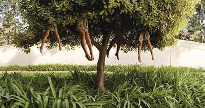 Ellen Kooi, 'Lissabon-tree', 2007